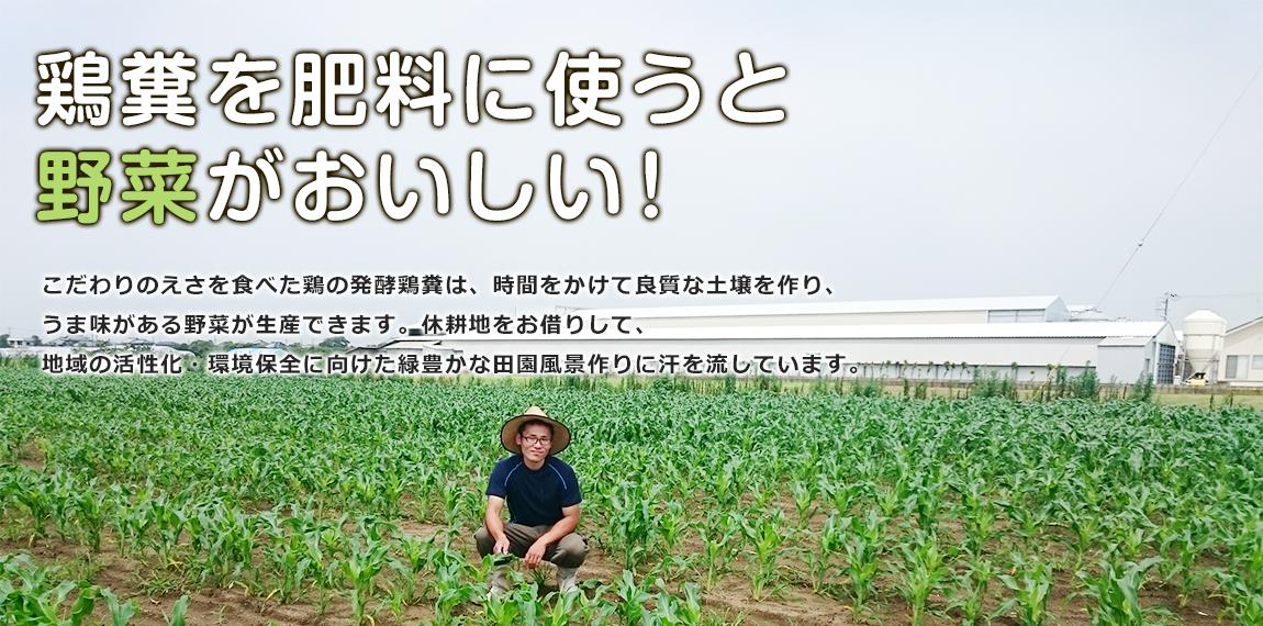 鶏糞を肥料に使うと野菜がおいしい!